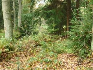 werken in het bos