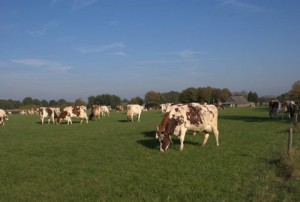 Kom koeien kijken (c) margot van den boer
