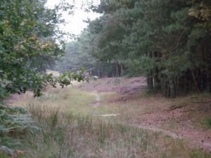 bos wandeling (c) margot van den boer
