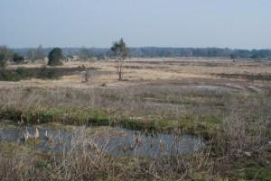 Uitzicht vanaf natuurbrug over de A2 (c) margot van den boer