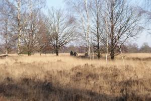 De heide, ook in de winter mooi (c) margot van den boer