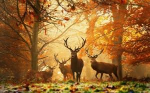 wild ree hert